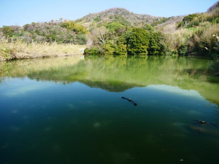 郊外の灌漑用の池にて  2020-04-17 00:00   _b0093754_23162732.jpg