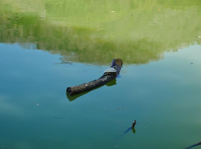 郊外の灌漑用の池にて  2020-04-17 00:00   _b0093754_23163877.jpg