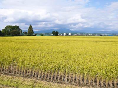 熊本の美味しいお米(七城米 長尾さんちのこだわりのお米)大好評発売中!現在の田んぼの様子を現地取材!_a0254656_18153053.jpg