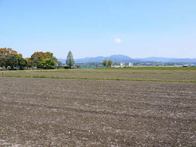 熊本の美味しいお米(七城米 長尾さんちのこだわりのお米)大好評発売中!現在の田んぼの様子を現地取材!_a0254656_18345320.jpg