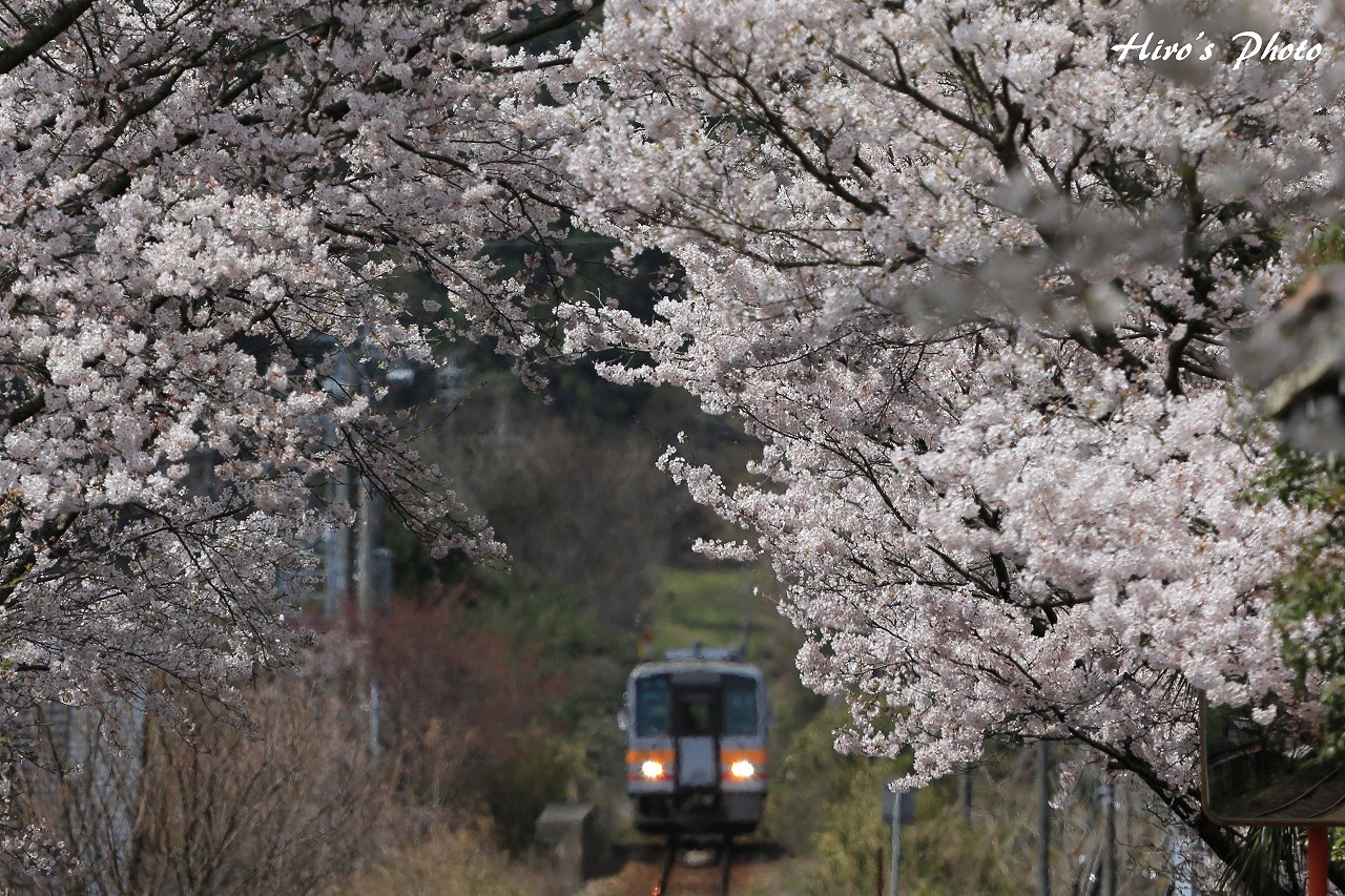 桜トンネル_c0352459_06064456.jpg