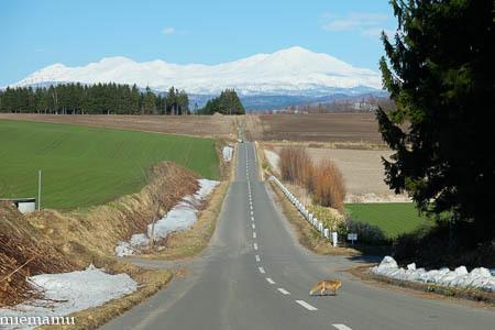 大雪連峰と…~4月の就実の丘_d0340565_20214952.jpg