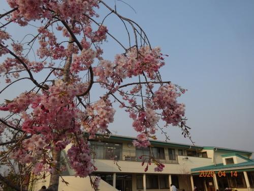園庭で「春」を発見✿_c0352066_16580440.jpg