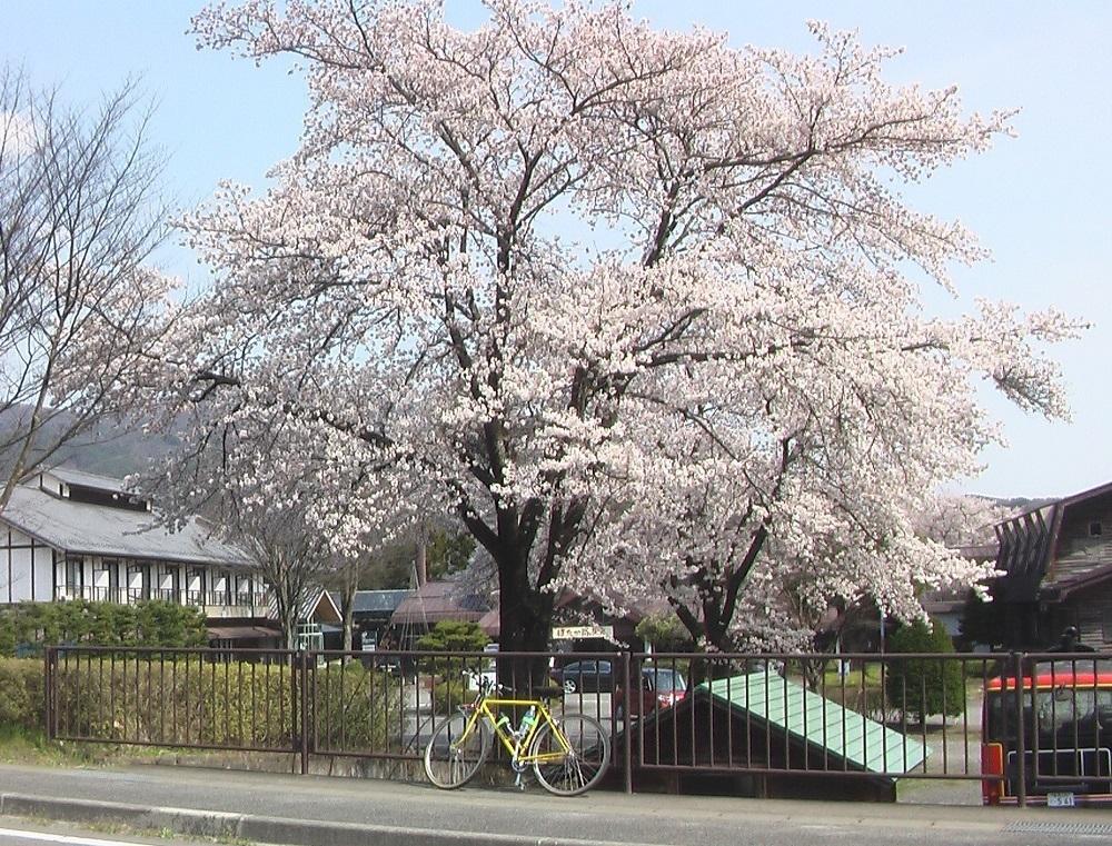 桜が咲いた_c0335218_08443311.jpg