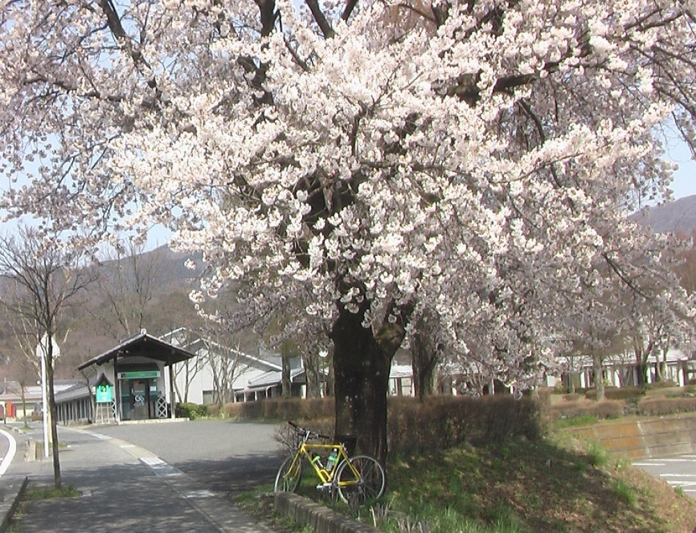 桜が咲いた_c0335218_08451305.jpg