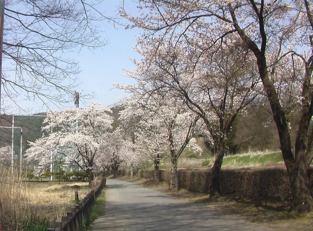 桜が咲いた_c0335218_08462150.jpg