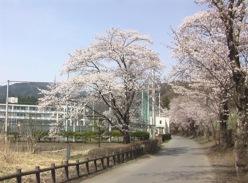 桜が咲いた_c0335218_08471573.jpg