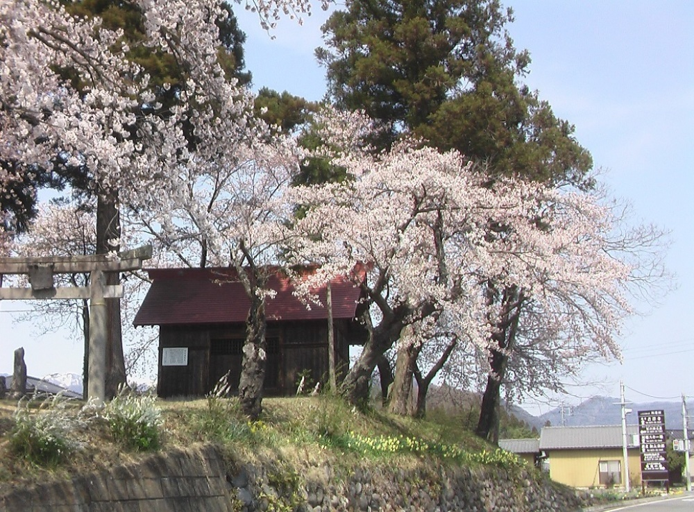 桜が咲いた_c0335218_08491895.jpg