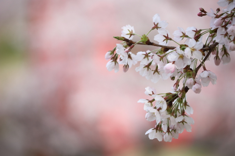 春色_e0169421_22073543.jpg