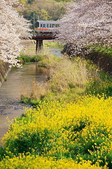 4月4日 桜と菜の花に彩られる列車たち_f0037227_20451590.jpg