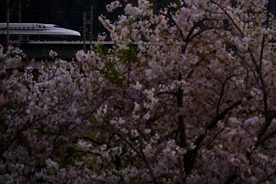 4月4日 桜と菜の花に彩られる列車たち_f0037227_20451630.jpg