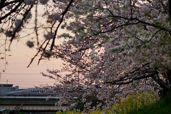 4月4日 桜と菜の花に彩られる列車たち_f0037227_20451646.jpg