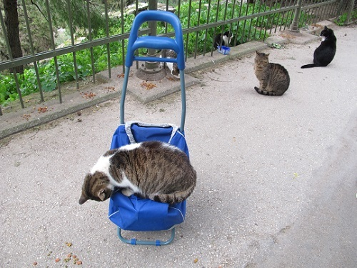 アテネ市から動物保護のための外出許可書をもらう。_f0037264_21002136.jpg
