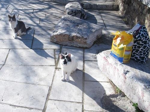 アテネ市から動物保護のための外出許可書をもらう。_f0037264_21085977.jpg