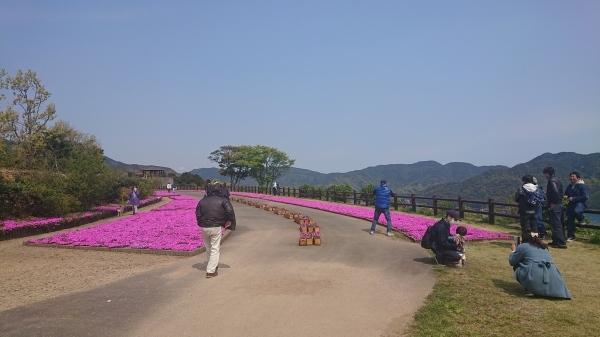 空の展望所の芝桜が満開です!_a0112066_10072052.jpg