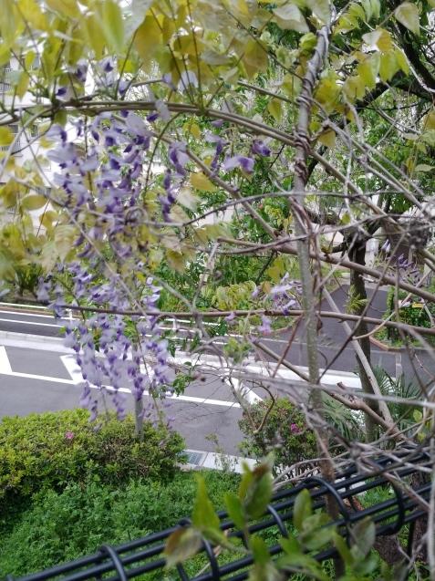 夕方散歩_c0162773_18522212.jpg
