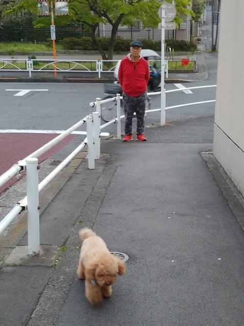 夕方散歩_c0162773_19000324.jpg