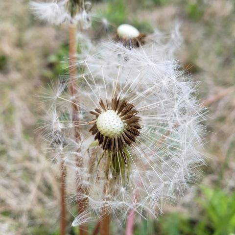 庭の収穫_a0101801_10234132.jpg