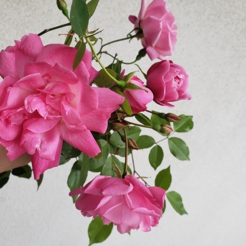 庭の収穫_a0101801_10253727.jpg