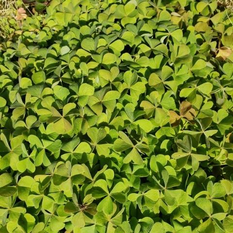 庭の収穫_a0101801_10265072.jpg