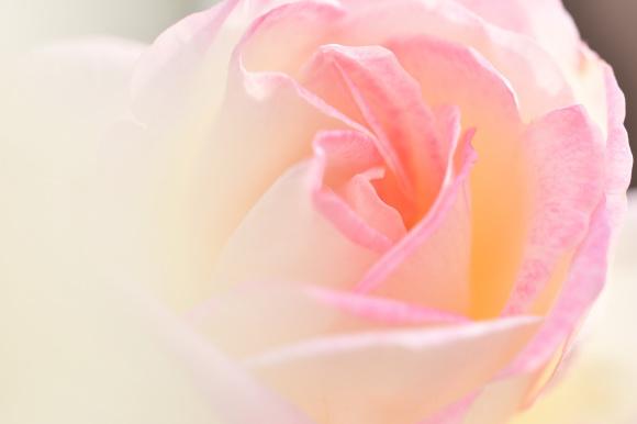 【無償】5/22開催「第二回・感謝を育むヒーリングイベント」ご案内_a0167003_00583661.jpeg