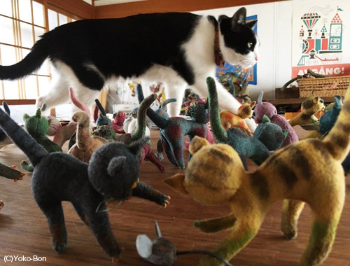 ねこ、ネコ、猫!〜離れのアトリエより〜_d0077603_10521106.jpg