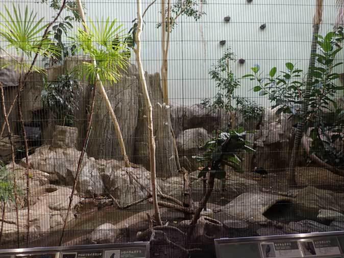 上野動物園バードハウス大図鑑③~1F:国内唯一!世界最大のキツツキ・ボウシゲラとハゲトキ_b0355317_22014222.jpg