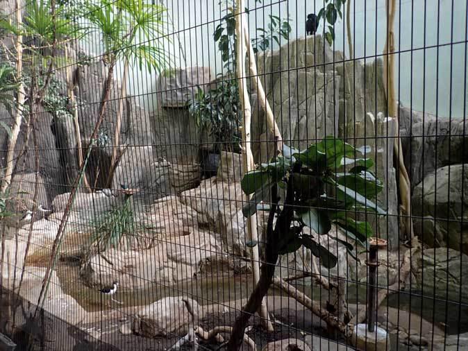 上野動物園バードハウス大図鑑③~1F:国内唯一!世界最大のキツツキ・ボウシゲラとハゲトキ_b0355317_22041124.jpg