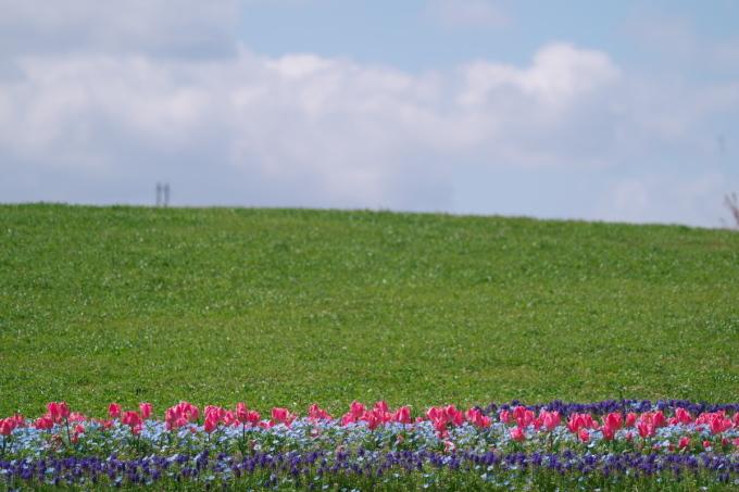 馬見丘陵公園のチュウ-リップ_b0408917_21001748.jpg