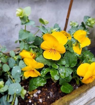 札幌は大快晴!我が家の可愛いクロッカスが花開きました(^^)_a0293265_16514198.jpg
