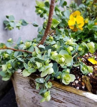 札幌は大快晴!我が家の可愛いクロッカスが花開きました(^^)_a0293265_16514221.jpg