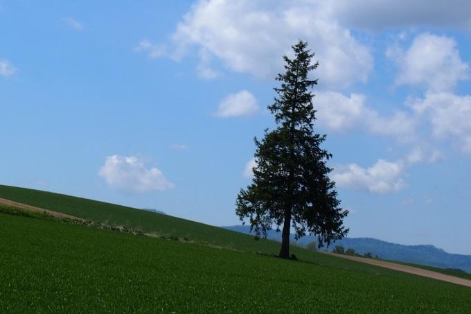 美瑛の丘の風景_b0106766_21482400.jpg