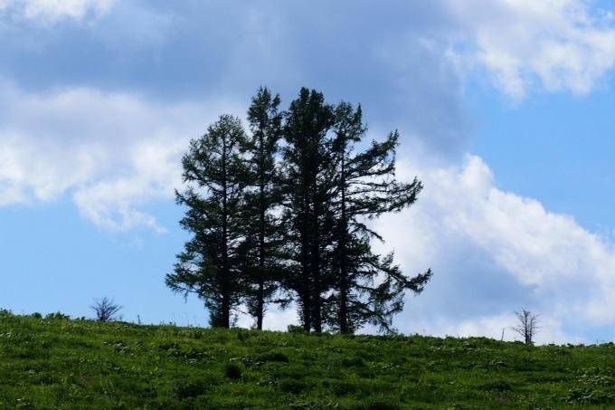 美瑛の丘、嵐の木_b0106766_21491484.jpg