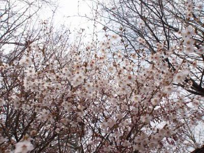 花曇り_a0129867_10491153.jpg