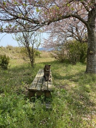 裏山の桜だより⑦ 2020 〜名残の桜をウグちゃんと〜_c0334574_19344505.jpeg