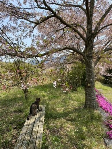 裏山の桜だより⑦ 2020 〜名残の桜をウグちゃんと〜_c0334574_19352358.jpeg