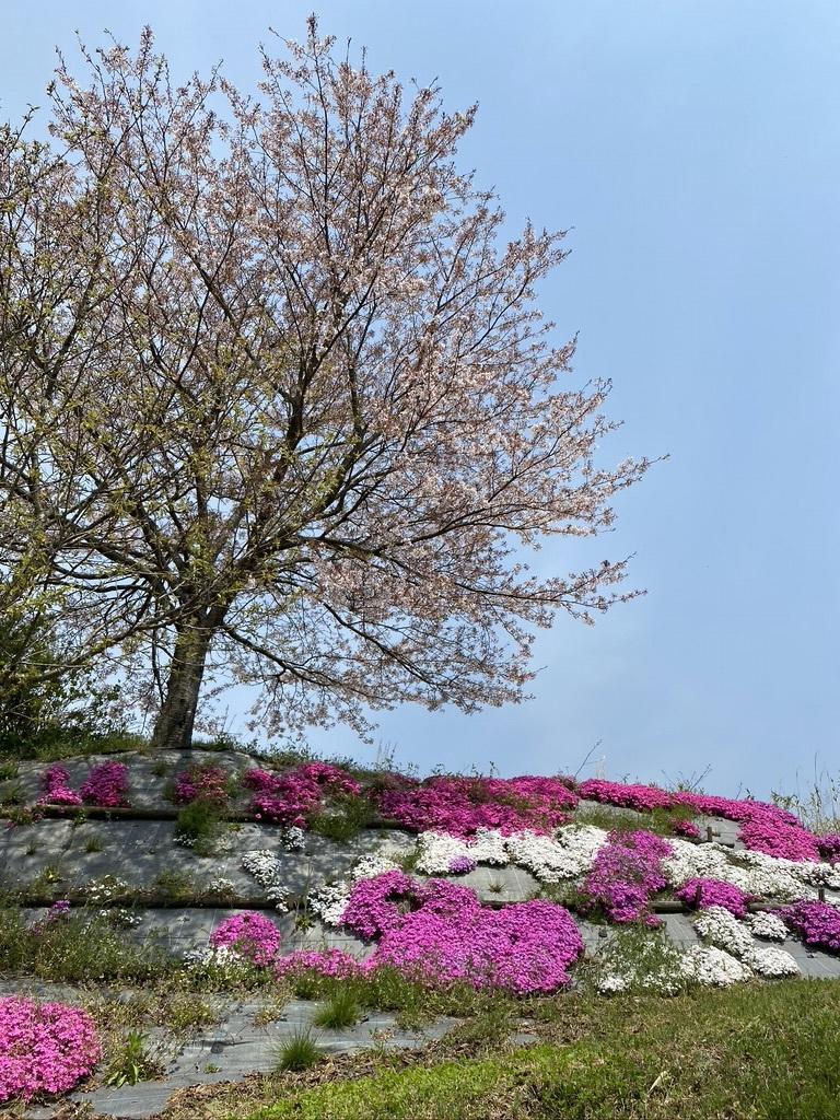 裏山の桜だより⑦ 2020 〜名残の桜をウグちゃんと〜_c0334574_19360055.jpeg
