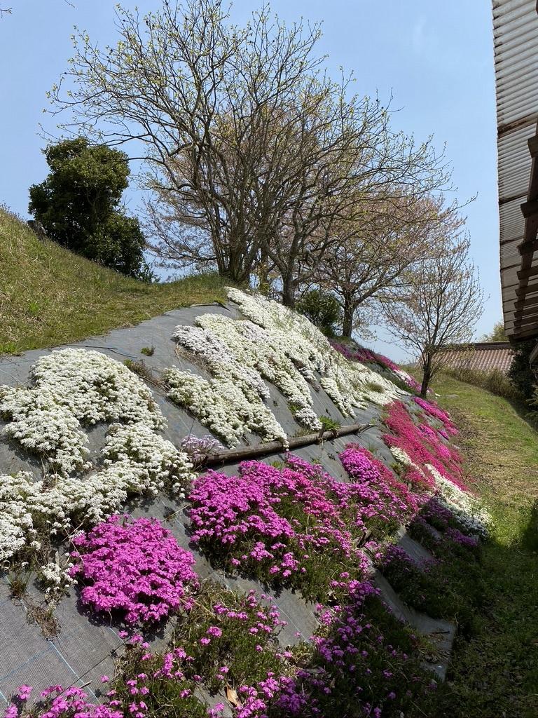 裏山の桜だより⑦ 2020 〜名残の桜をウグちゃんと〜_c0334574_19361681.jpeg