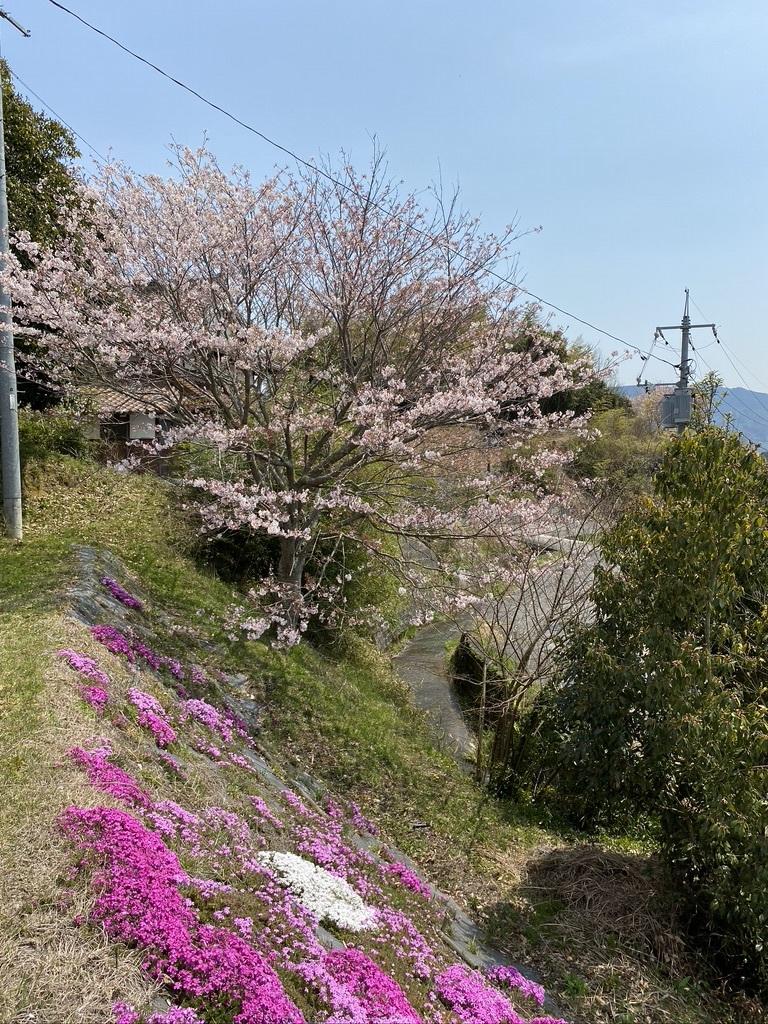 裏山の桜だより⑦ 2020 〜名残の桜をウグちゃんと〜_c0334574_19364619.jpeg