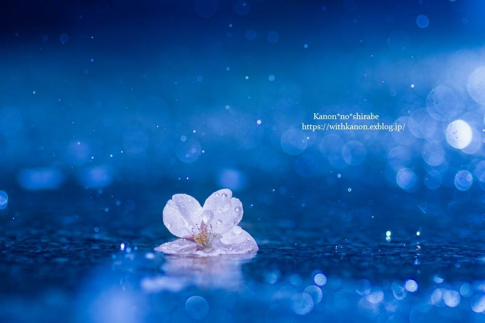 桜雨②_d0148187_22230817.jpg
