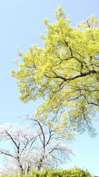 Pastelな春限定色_b0324291_22292003.jpg