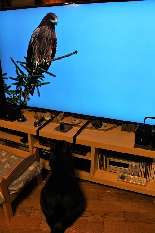 テレビ学習_a0333195_22361352.jpg