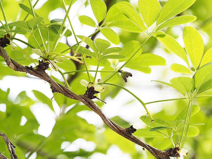 """樹木の""""形とくらし""""ひとり観察会レポート(1)_d0163696_16041099.jpg"""