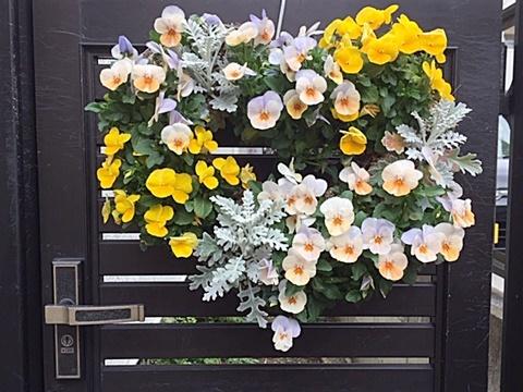 小さい庭&ハート形ビオラのハンギング_d0046702_07254350.jpg