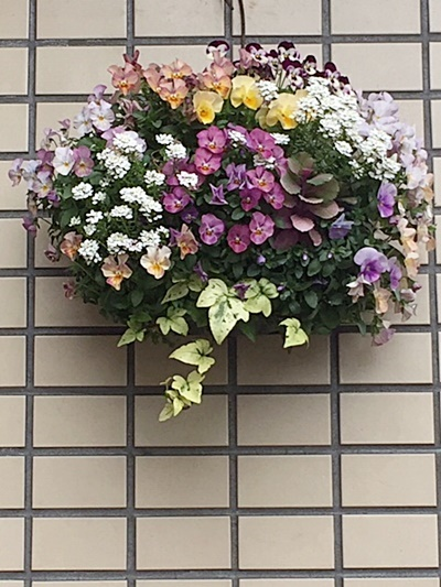 小さい庭&ハート形ビオラのハンギング_d0046702_07270405.jpg