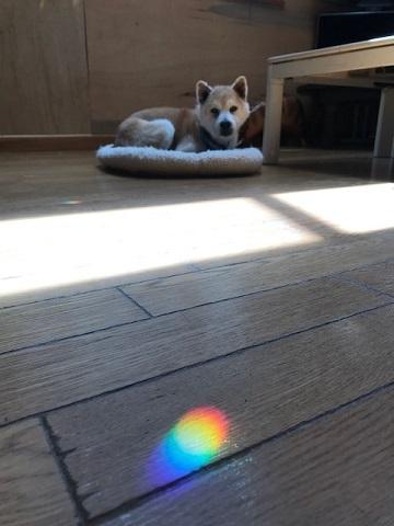 癒しの虹色_f0242002_17090010.jpg