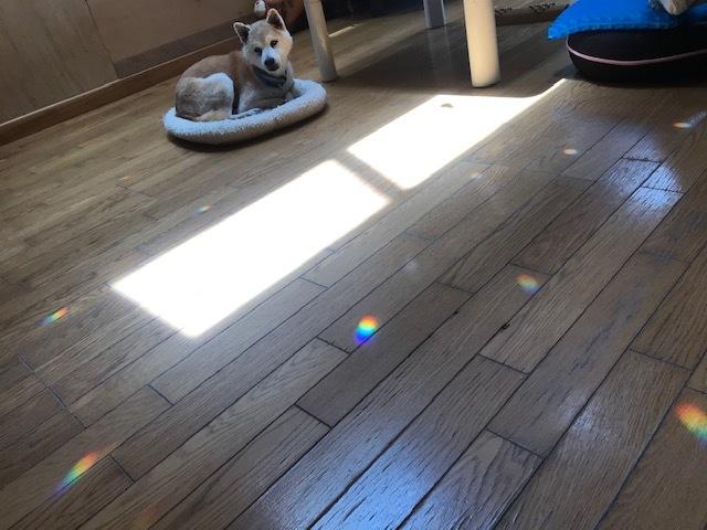 癒しの虹色_f0242002_17090663.jpg