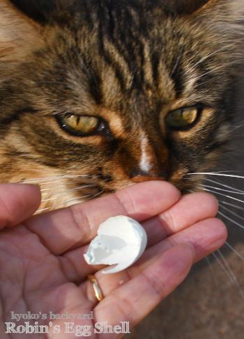 裏庭で見つけたもの(と猫)_b0253205_10423493.jpg