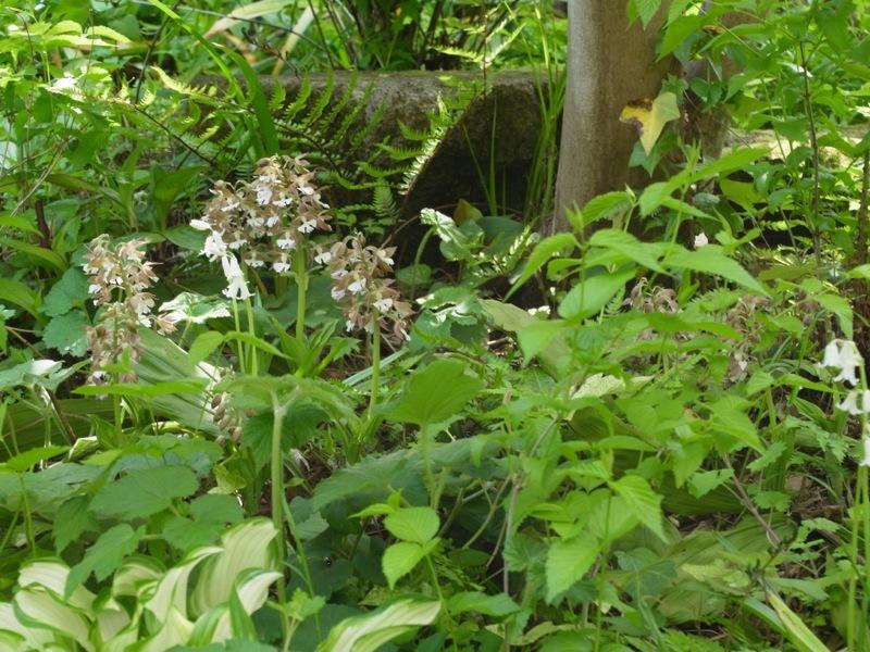 今年はヤマツツジも咲いた。_e0276411_19303679.jpg