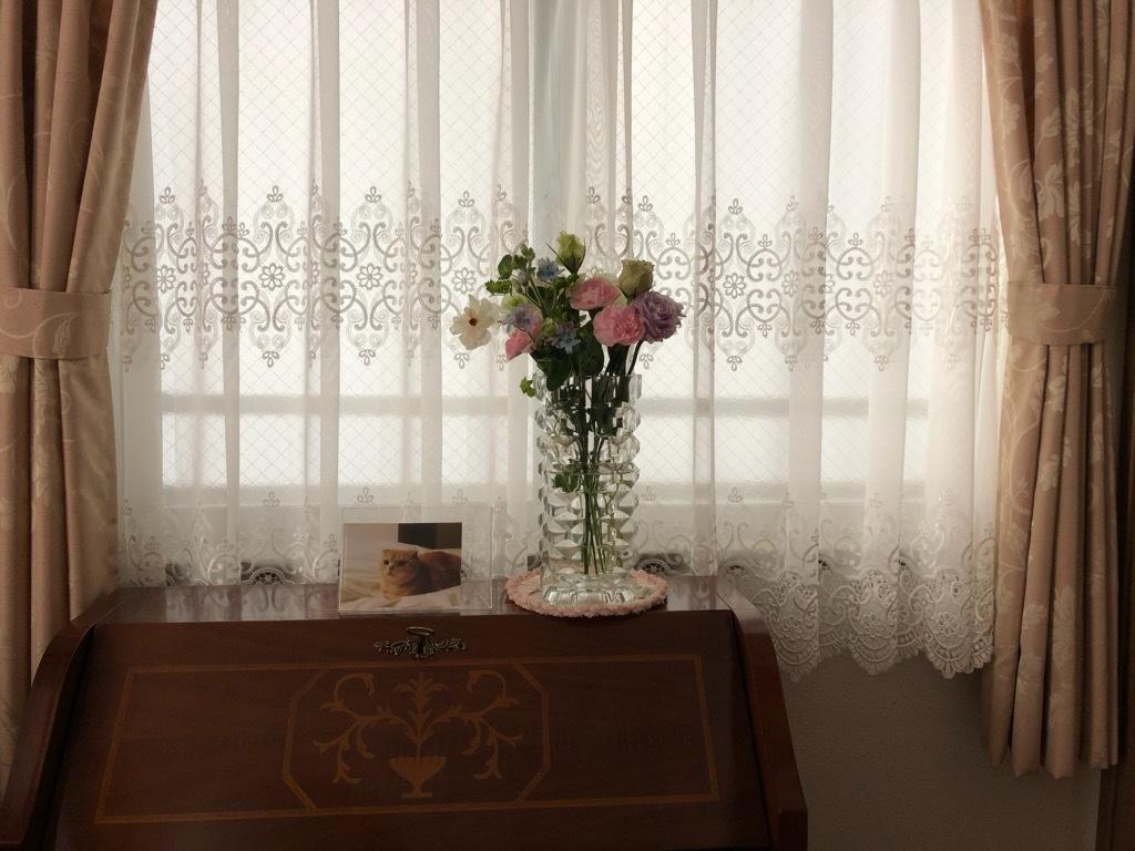 家の中の癒し_e0344611_16290137.jpg